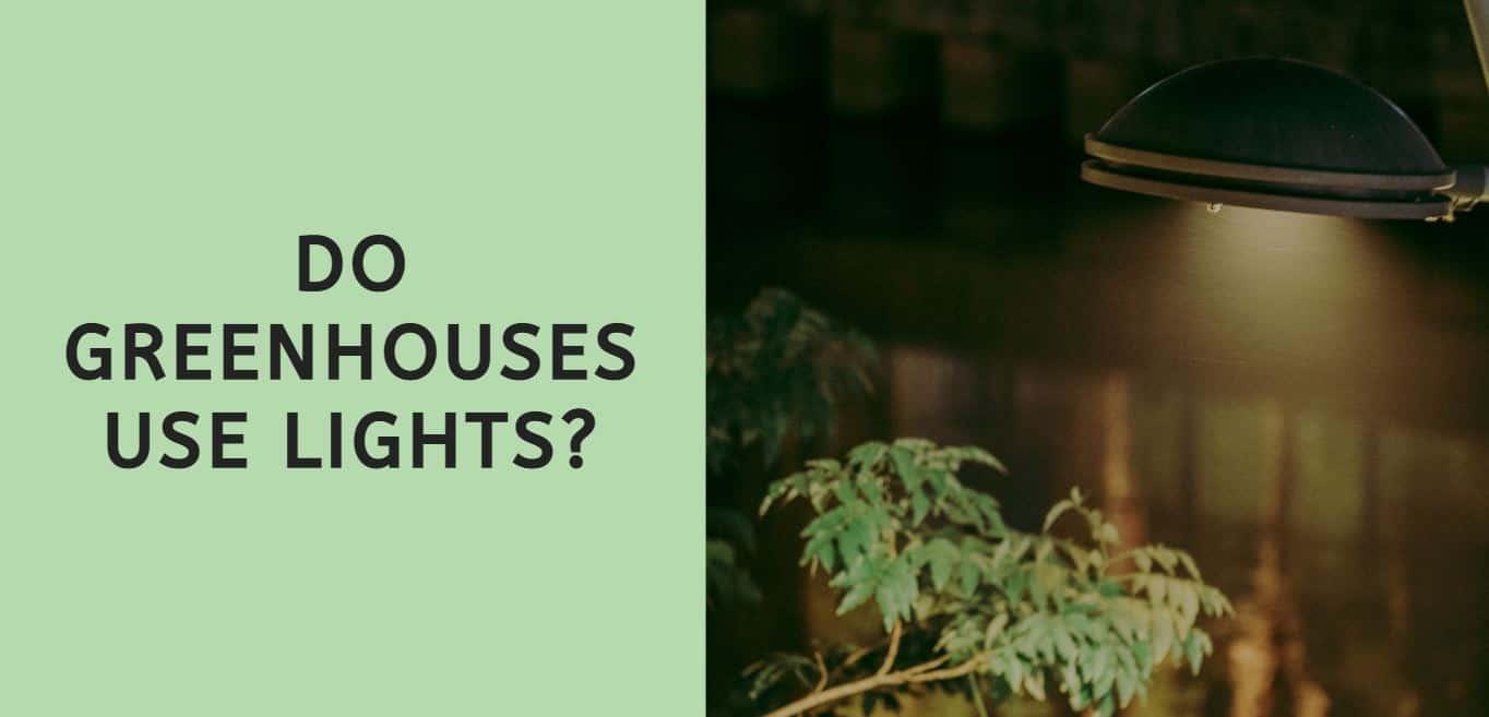 Do Greenhouses Use Lights?