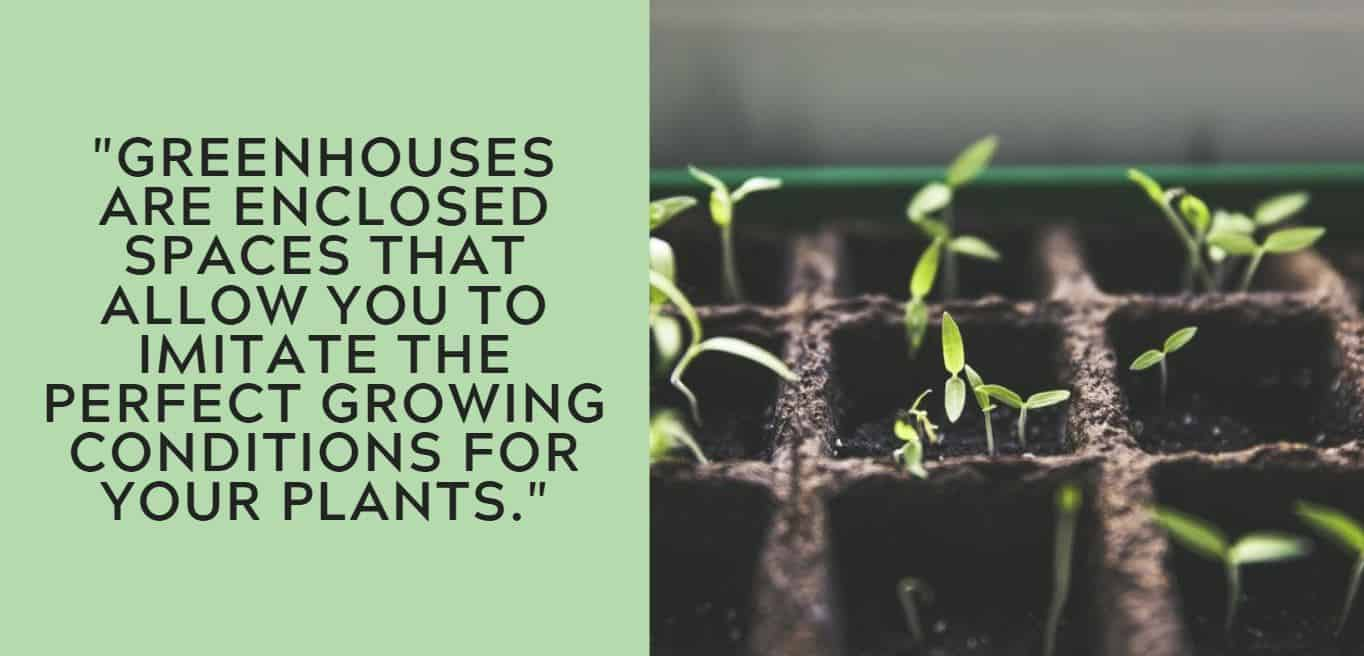 """Greenhouses are enclosed spaces that allow you to imitate the perfect growing conditions for your plants."""