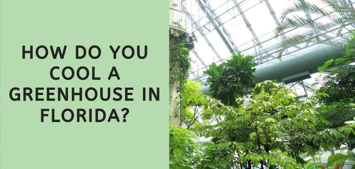 How Do You Cool a Greenhouse in Florida?