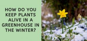 How do You Keep Plants alive in a Greenhouse in the Winter?