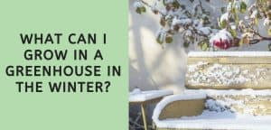 What Can I Grow in a Greenhouse in the Winter?