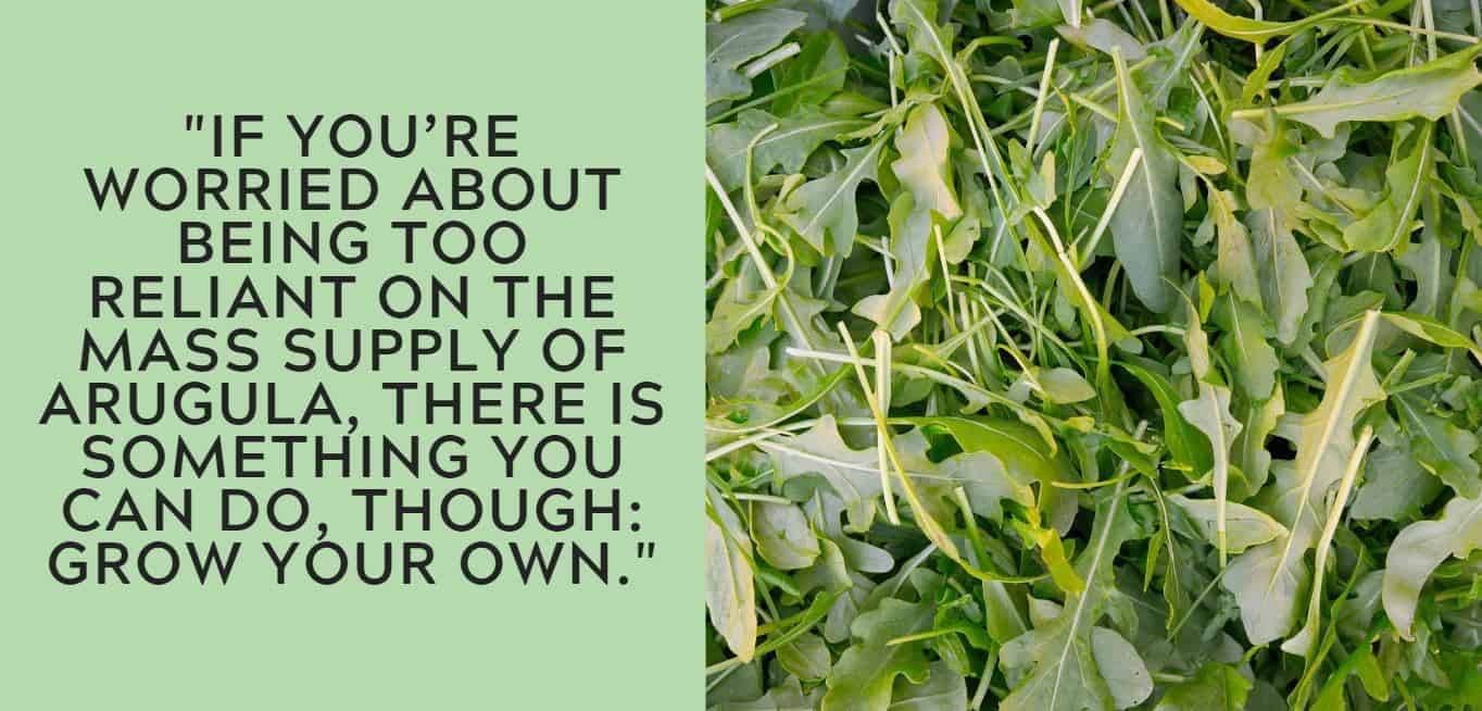 """If you're worried about being too reliant on the mass supply of arugula, there is something you can do, though: grow your own."""