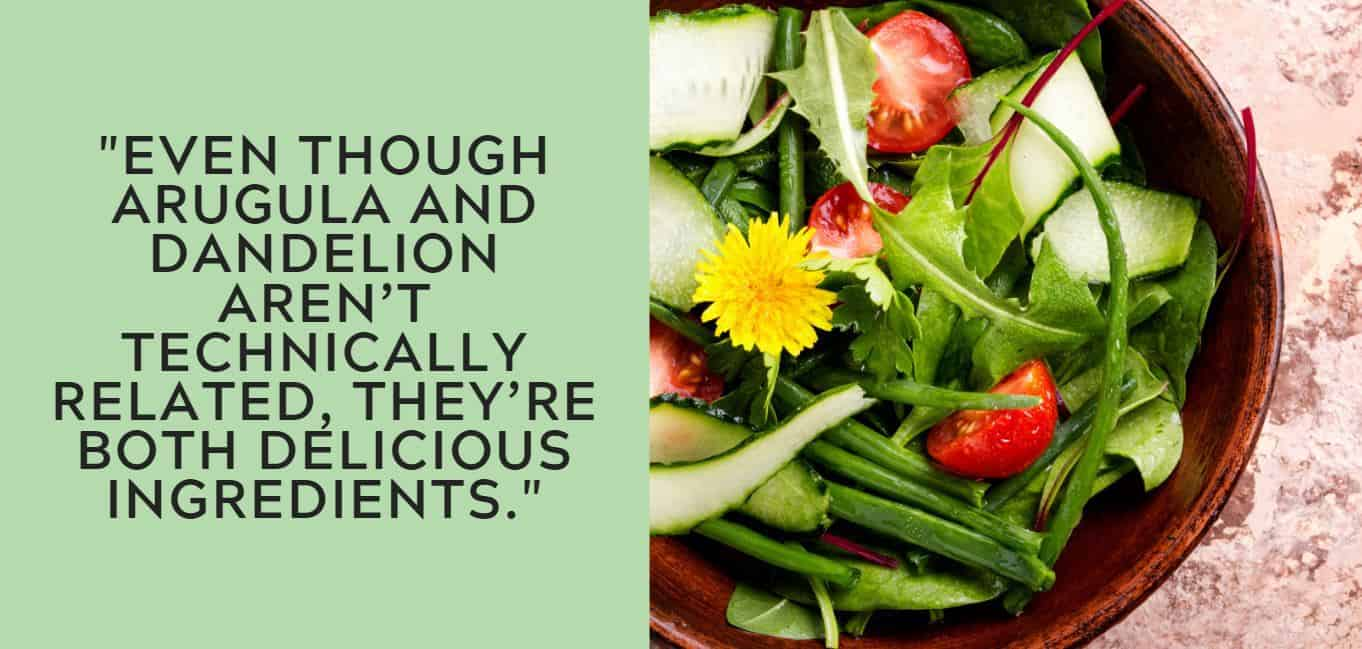 """""""even though arugula and dandelion aren't technically related, they're both delicious ingredients."""""""