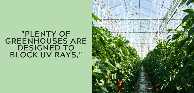 """plenty of greenhouses are designed to block UV rays."""