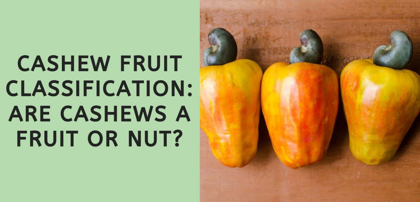 Cashew Fruit Classification: Are Cashews a Fruit or a Nut?