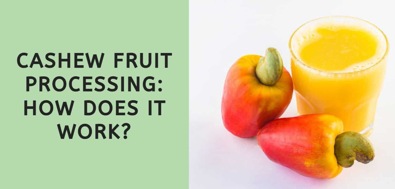 cashew fruit processing: how does it work?