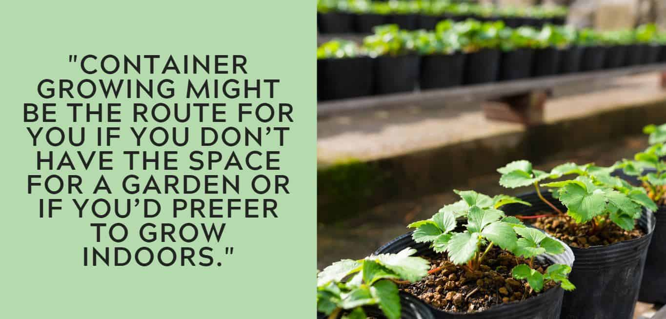 """""""Container growing might be the route for you if you don't have the space for a garden or if you'd prefer to grow indoors."""""""