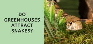 Do Greenhouses Attract Snakes?