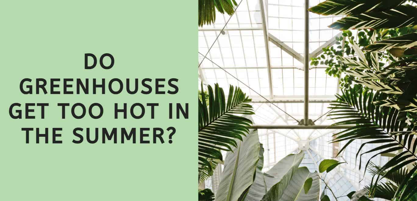 Do Greenhouses Get Too Hot in the Summer?