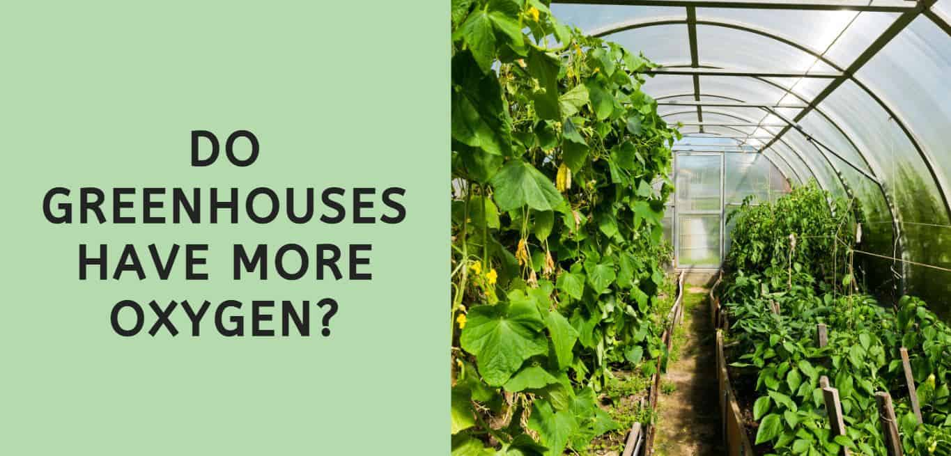 Do Greenhouses Have More Oxygen?