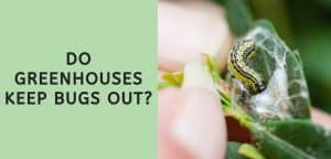 Do Greenhouses Keep Bugs Out?