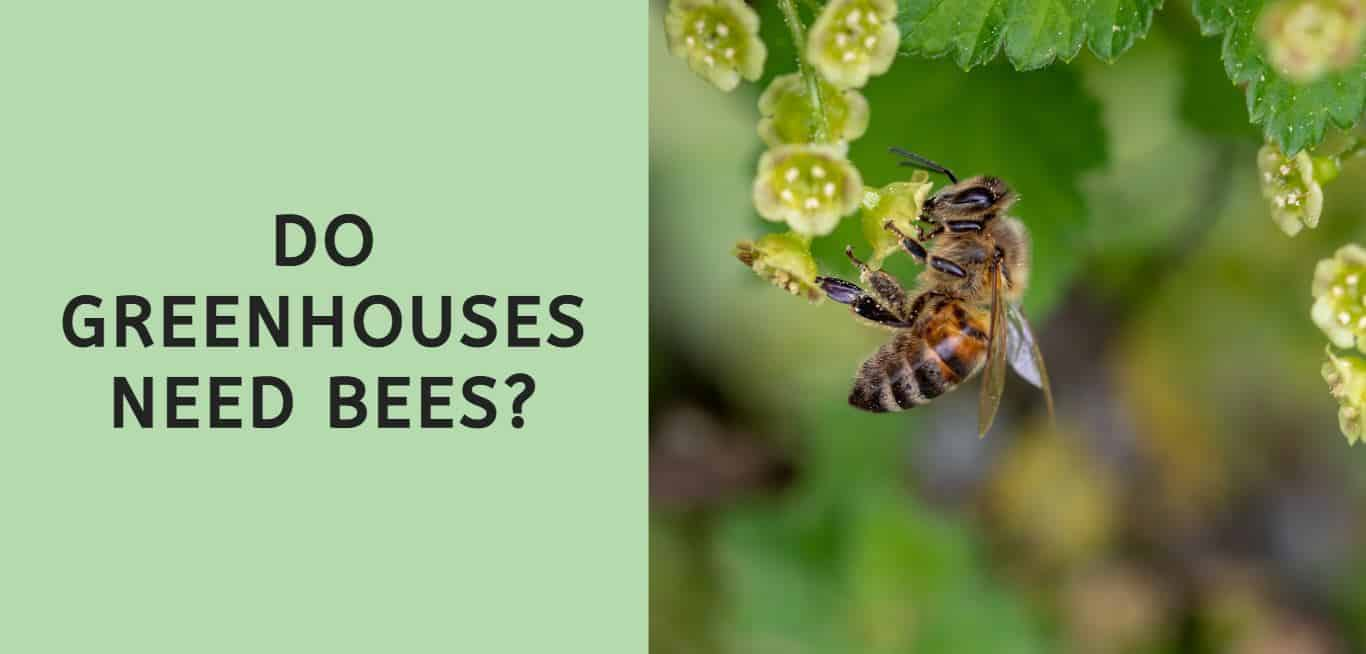 Do Greenhouses Need Bees?