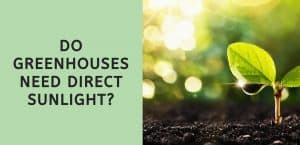 Do Greenhouses Need Direct Sunlight?