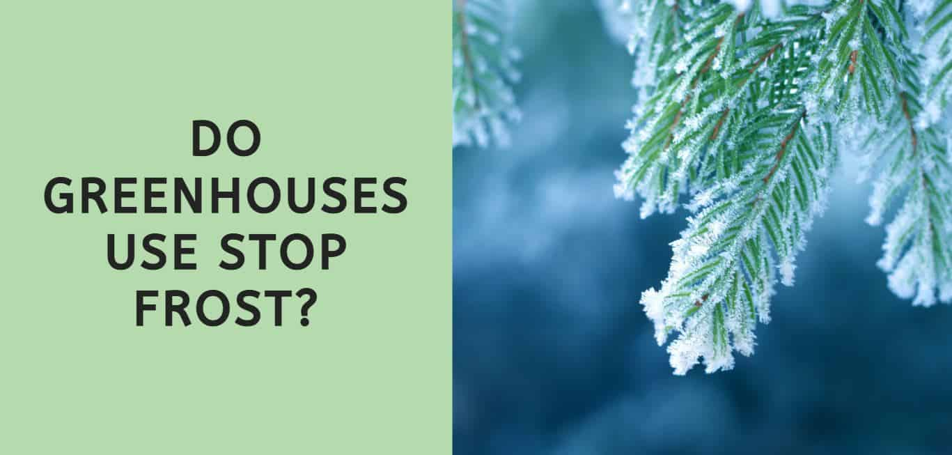 Do Greenhouses Stop Frost?