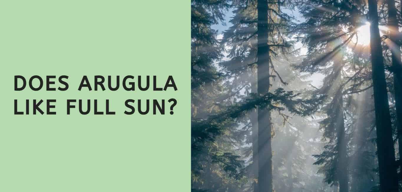 Does Arugula Like Full Sun?