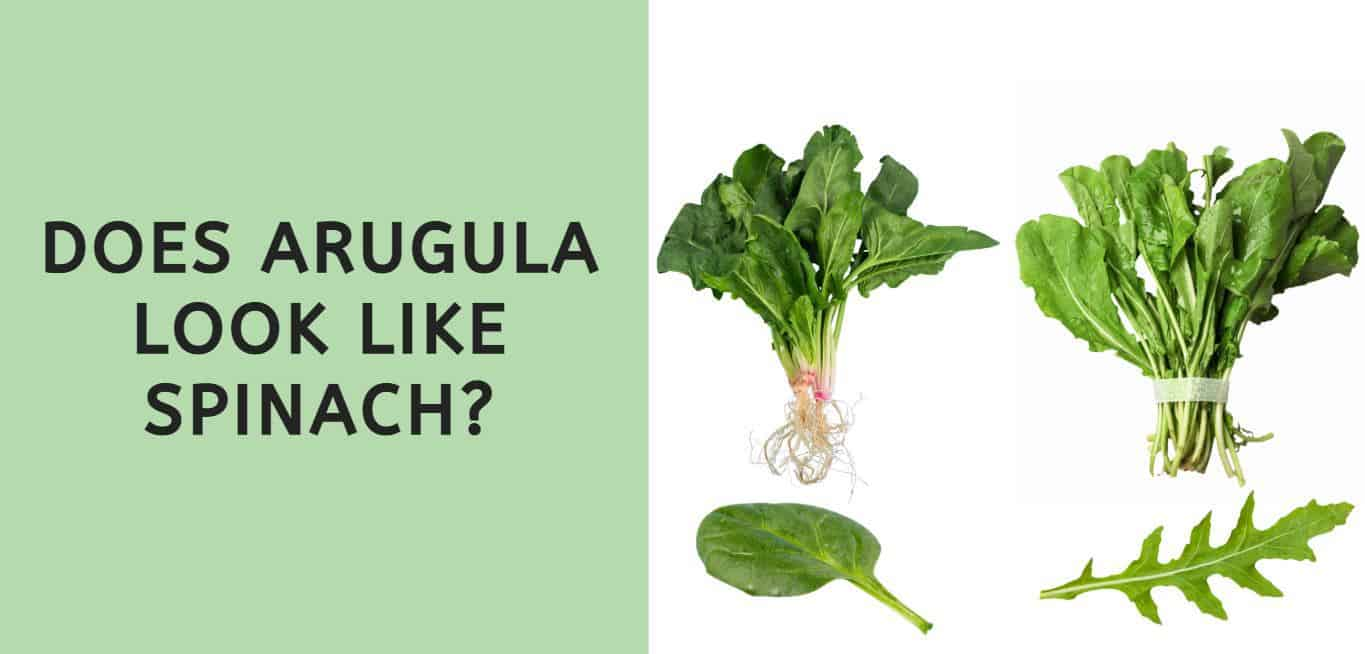 Does Arugula Look Like Spinach?