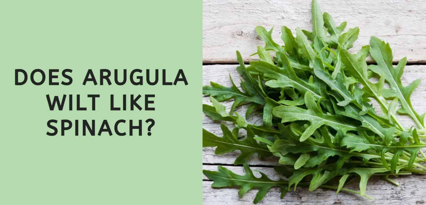 Does Arugula Wilt Like Spinach?
