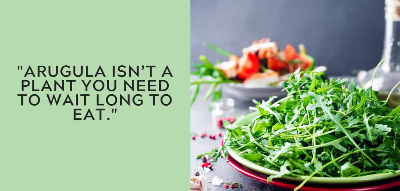 """""""Arugula isn't a plant you need to wait long to eat."""""""