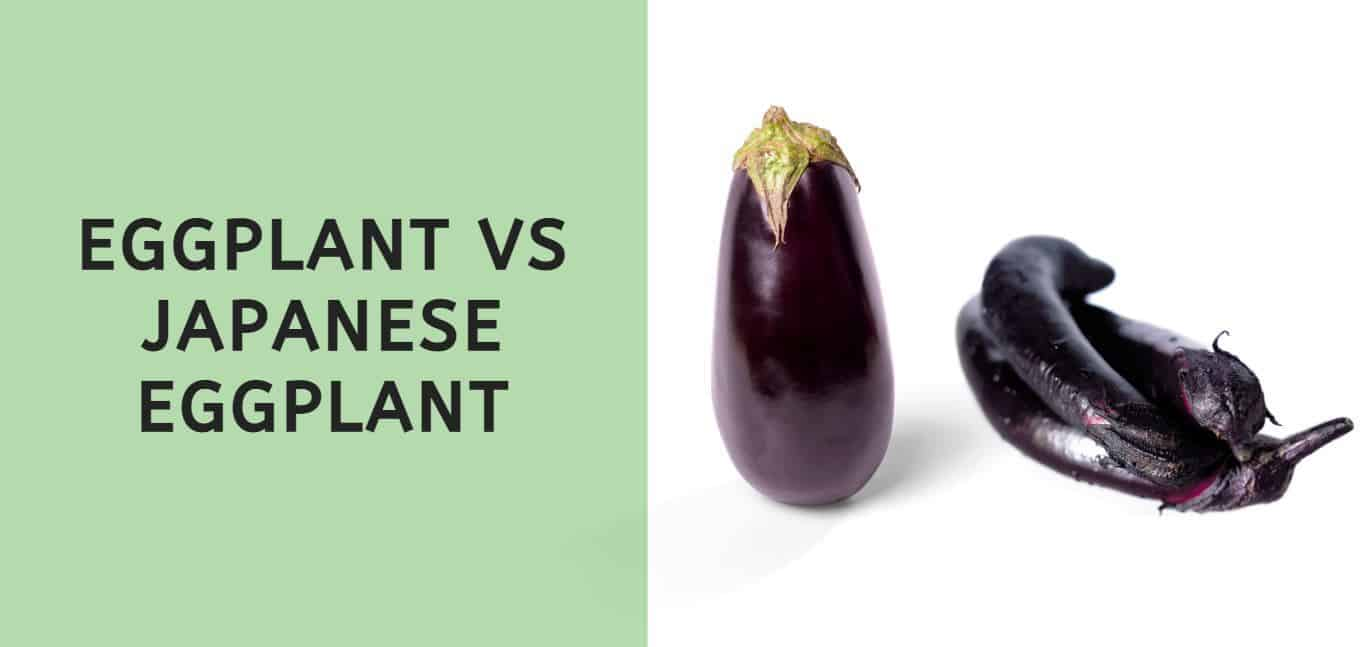 Eggplant vs Japanese Eggplant