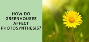 How Do Greenhouses Affect Photosynthesis?