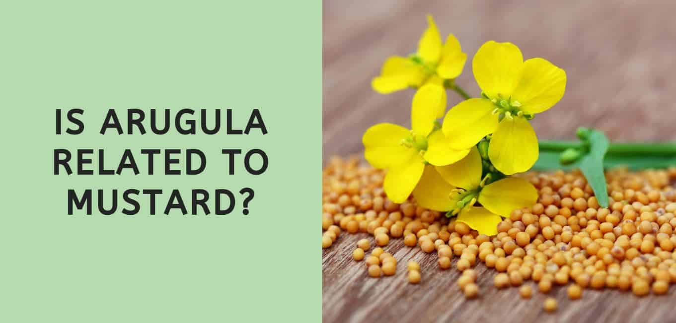 Is Arugula Related to Mustard?