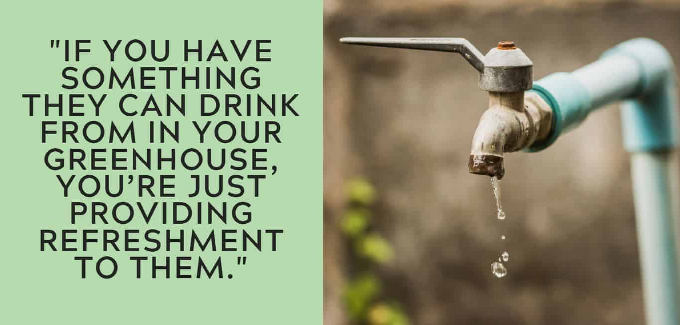"""""""If you have something they can drink from in your greenhouse, you're just providing refreshment to them."""""""