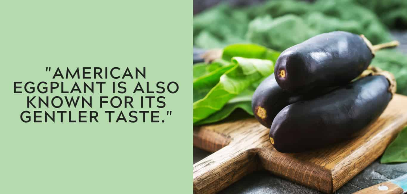 """""""American eggplant is also known for its gentler taste."""""""
