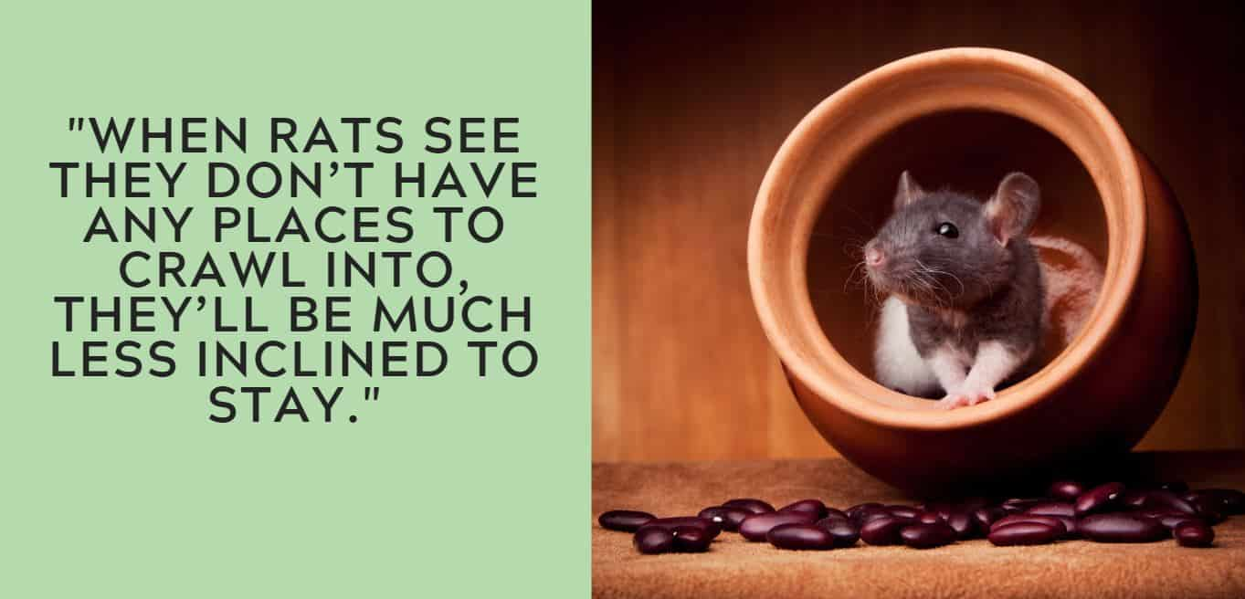 """""""When rats see they don't have any places to crawl into, they'll be much less inclined to stay."""""""