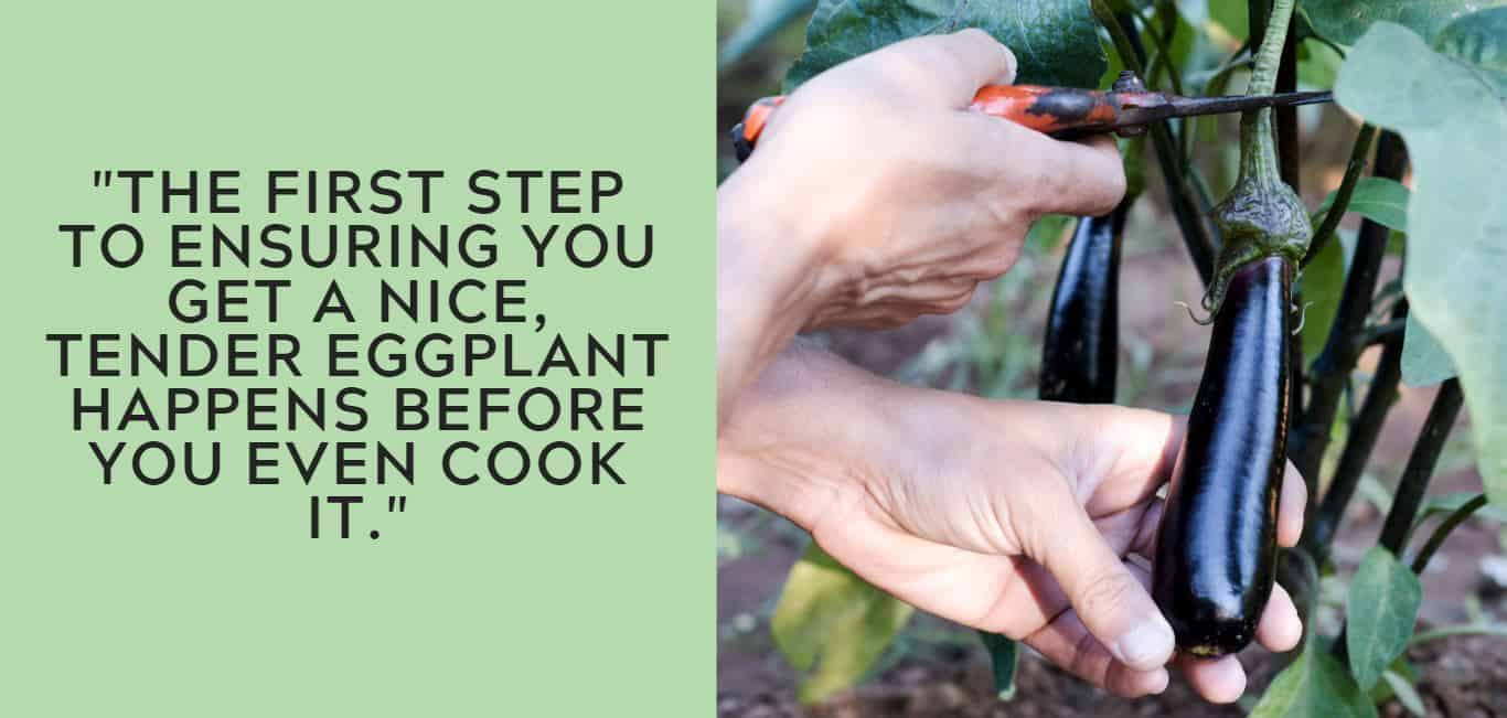"""The first step to ensuring you get a nice, tender eggplant happens before you even cook it."""
