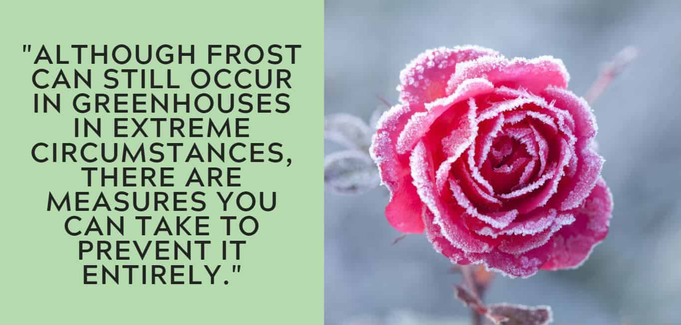 """""""Although frost can still occur in greenhouses in extreme circumstances, there are measures you can take to prevent it entirely."""""""