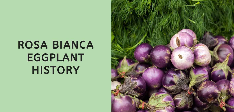 Rosa Bianca Eggplant History