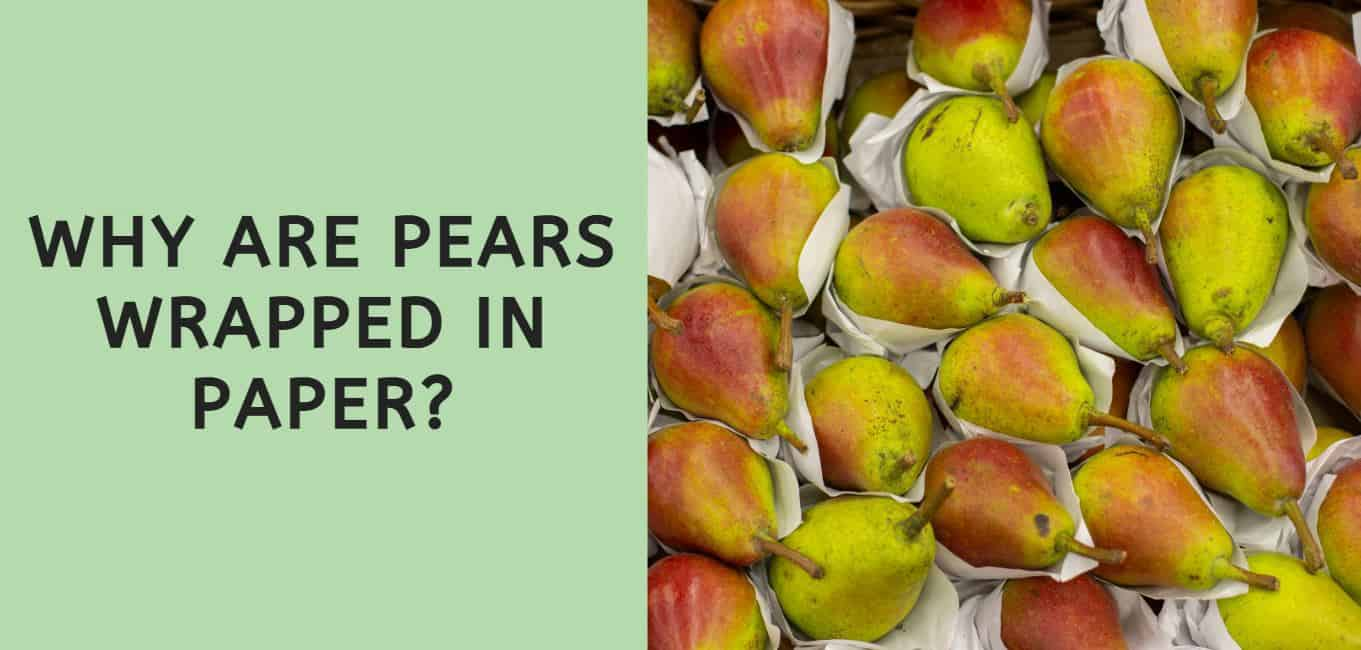 why are pears wrapped in paper?