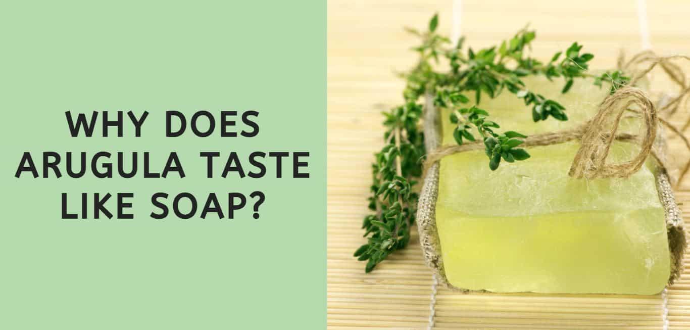 why does arugula taste like soap?