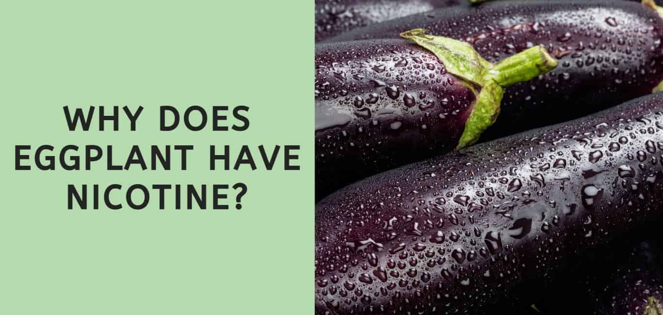 Why Does Eggplant Have Nicotine?