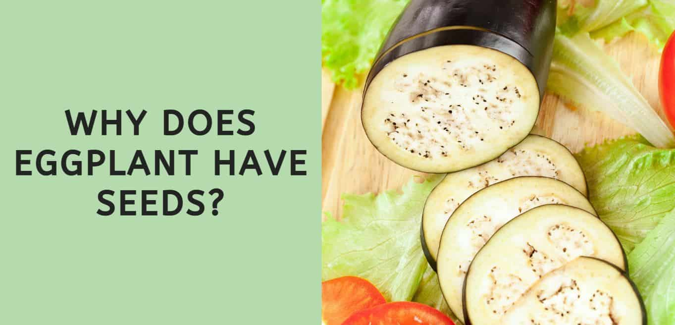 Why Does Eggplant Have Seeds?