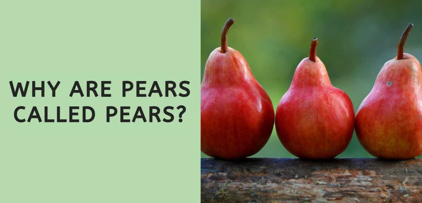 Why are Pears Called Pears?