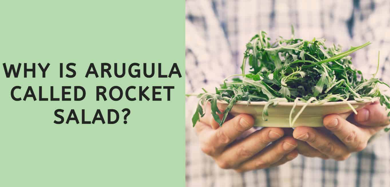 Why is Arugula Called Rocket Salad?