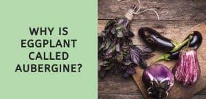 Why is Eggplant Called Aubergine?