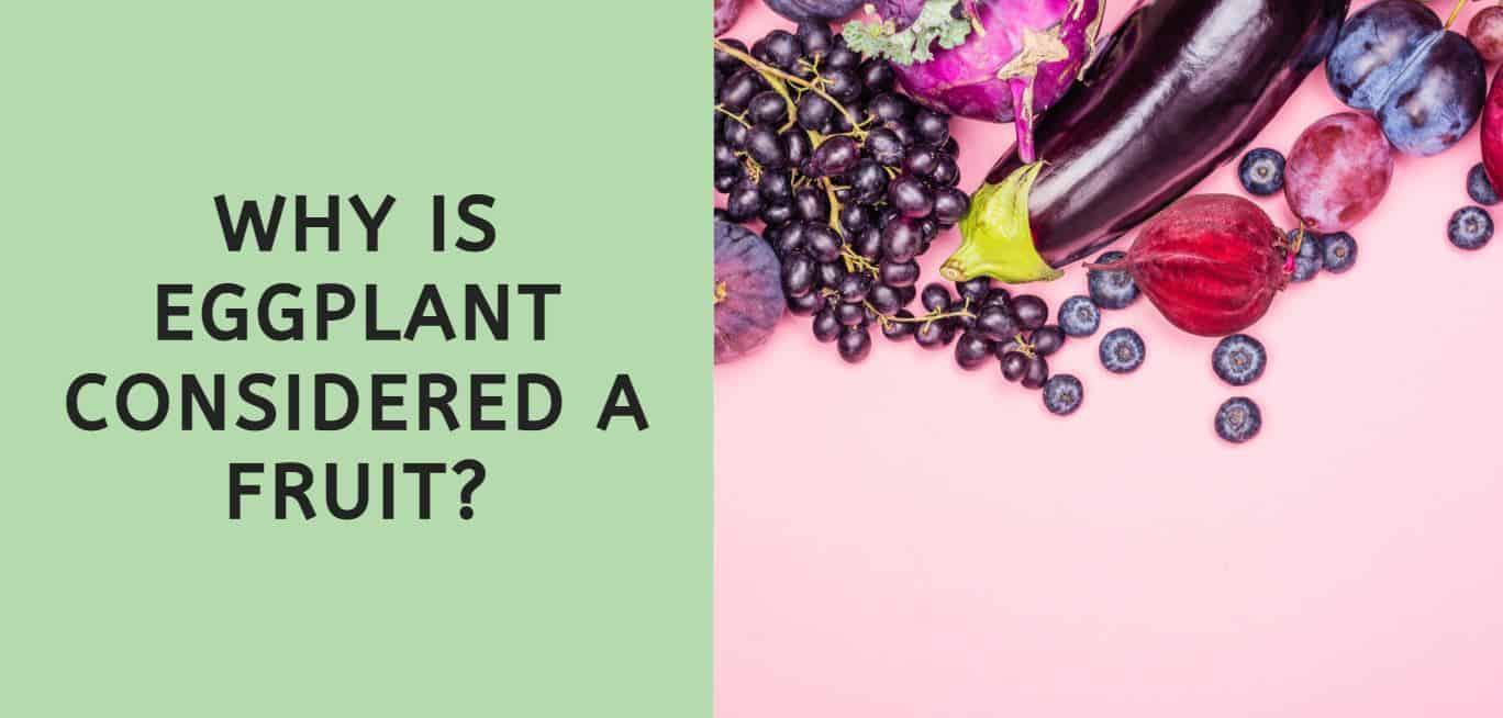 why is eggplant considered a fruit?