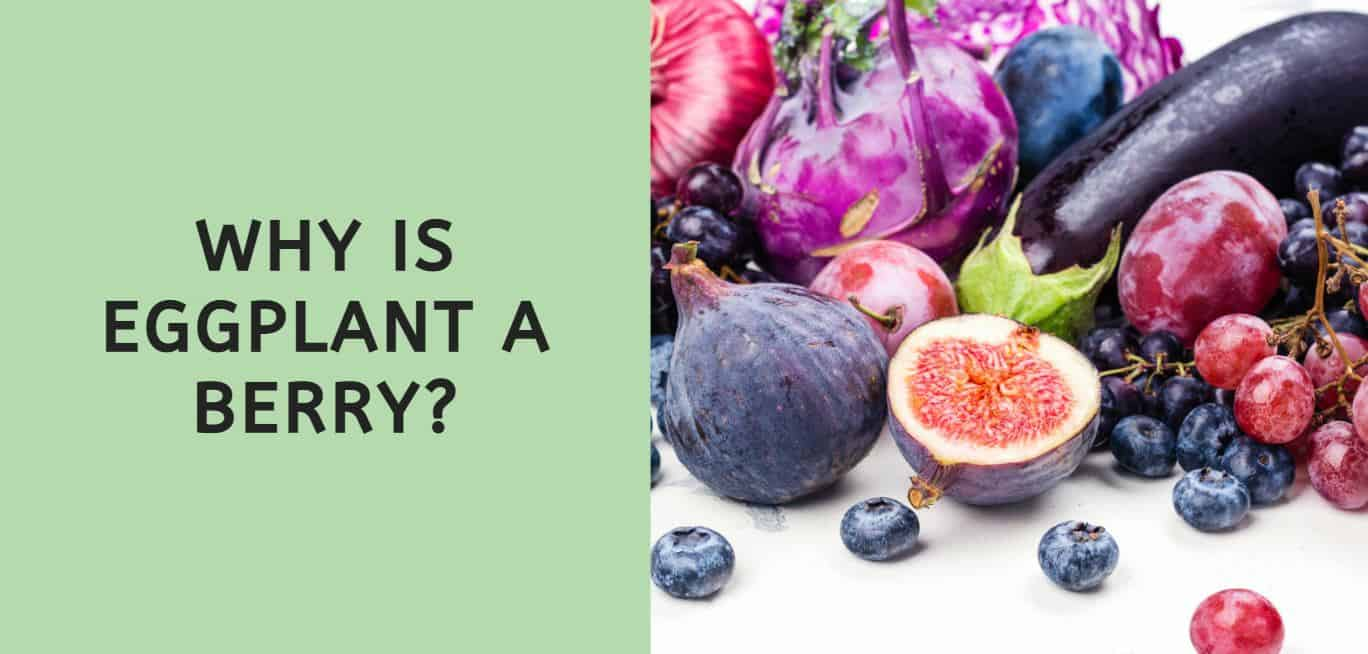 Why is Eggplant a Berry?