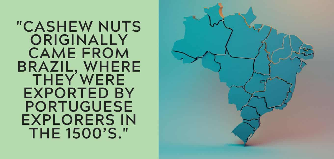 """Cashew nuts originally came from Brazil, where they were exported by Portuguese explorers in the 1500's."""