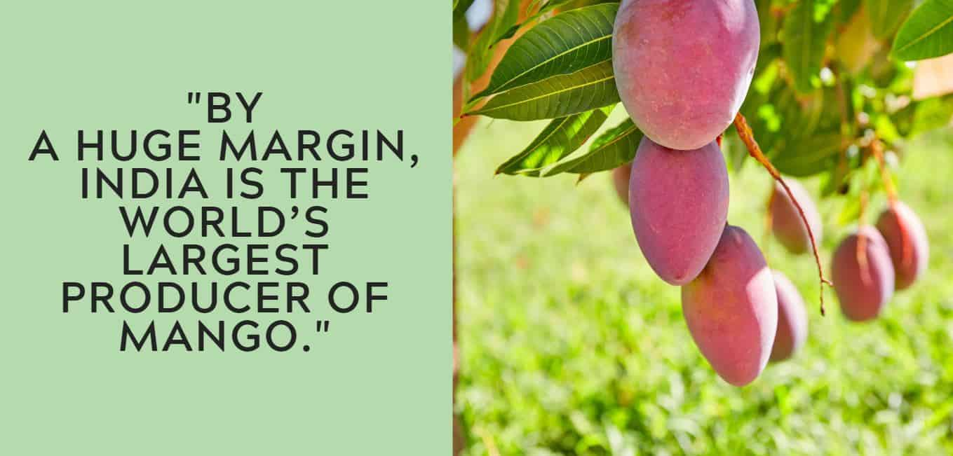 """""""By ahugemargin, India is the world's largest producer of mango."""""""