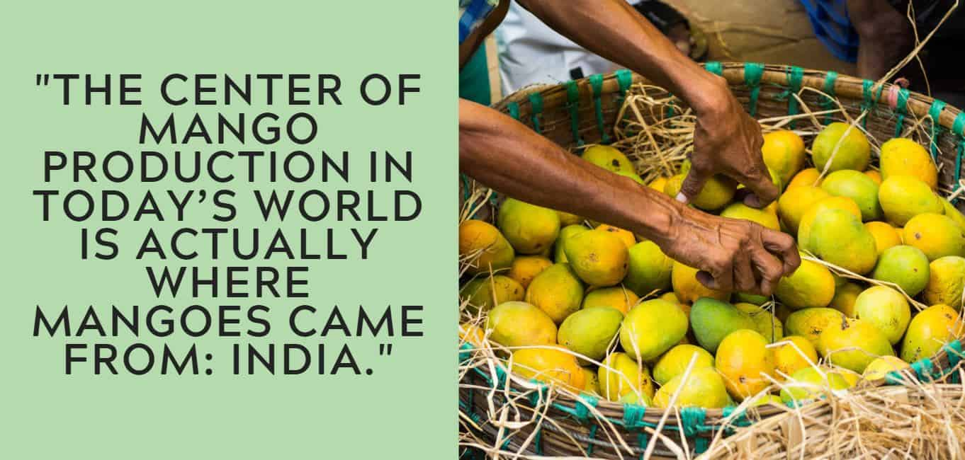 """""""The center of mango production in today's world is actually where mangoes came from: India."""""""