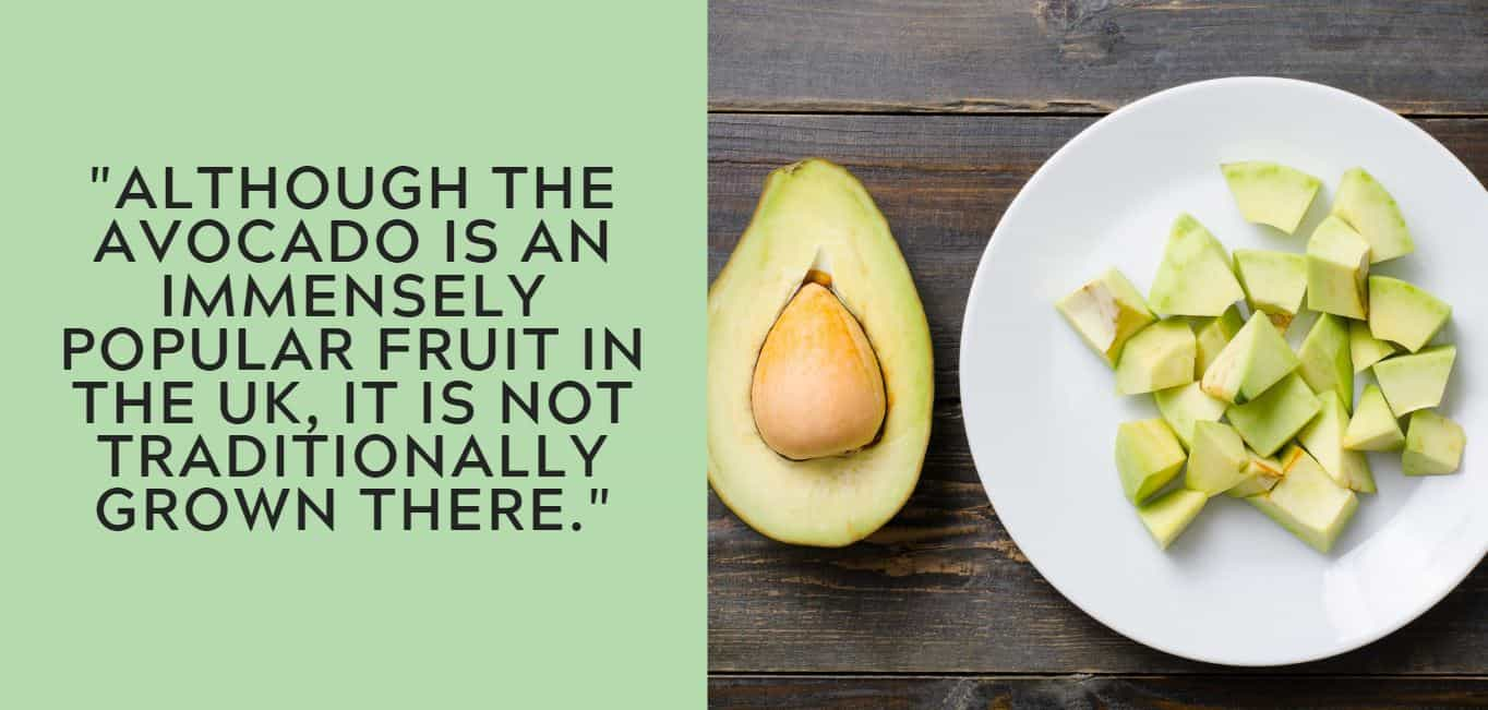 """""""Although the avocado is an immensely popular fruit in the UK, it is not traditionally grown there."""""""