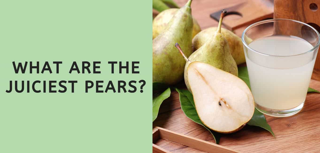 What are the Juiciest Pears?