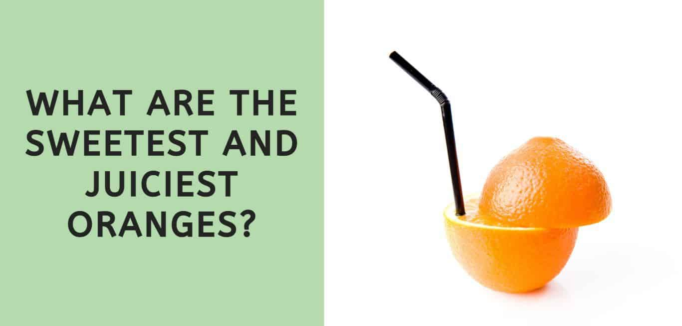 What are the Sweetest and Juiciest Oranges?
