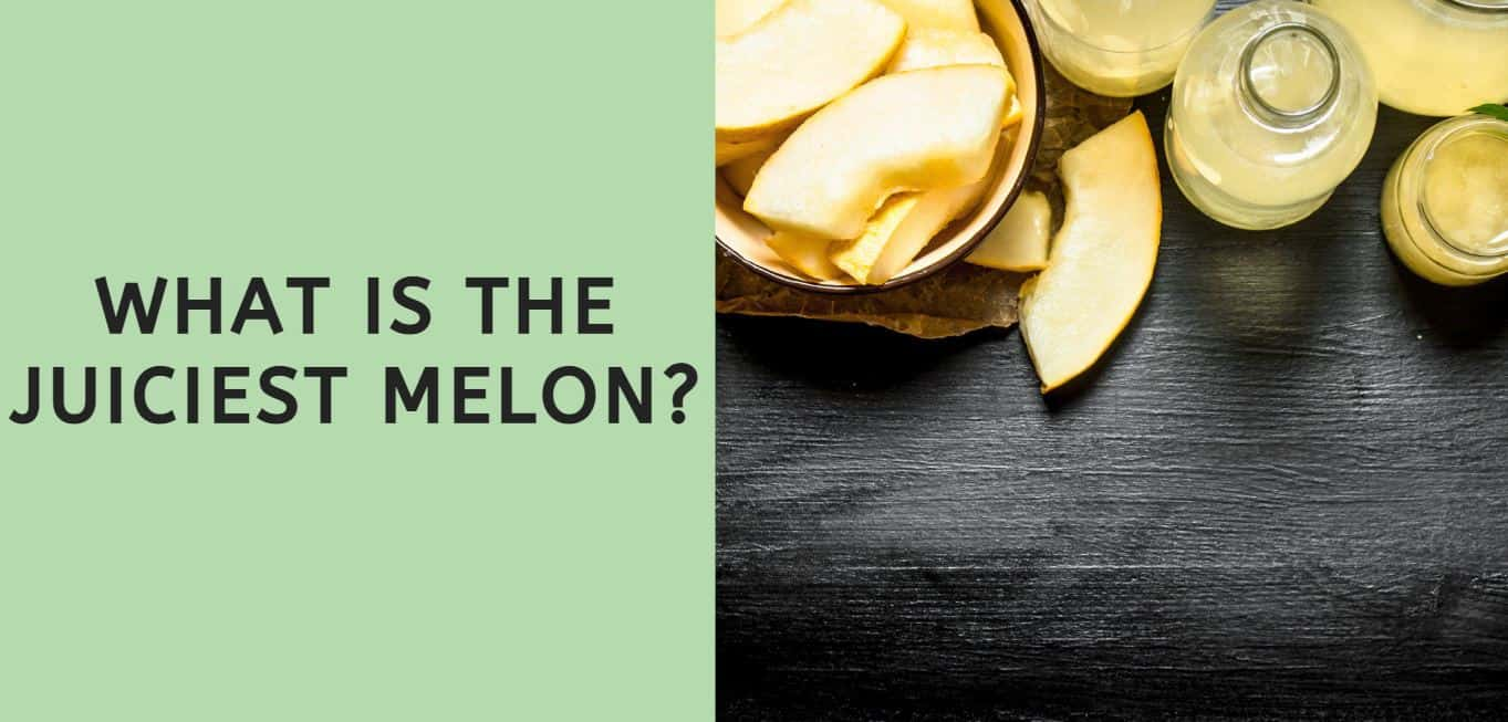 What is the Juiciest Melon?