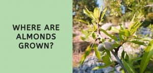 Where are Almonds Grown?
