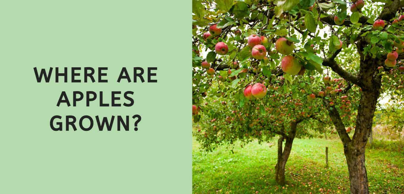 Where are Apples Grown?