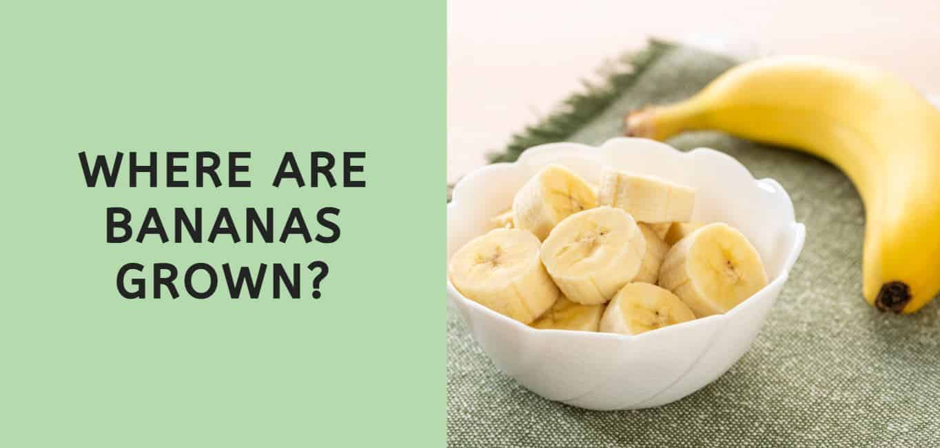 Where are Bananas Grown?